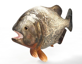 3D model Piranha Fish Rigged