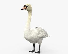 Mute Swan HD 3D