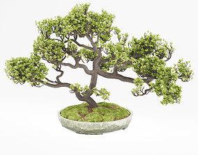 3D model blossoming Bonsai