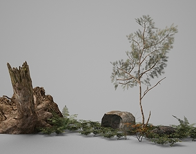 Ground Plants and Rotten Wood Piles and Stones 3D model