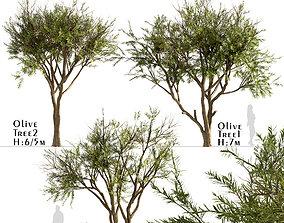 tree Set of Olive or Olea Europaea Trees - 3 Tree 3D