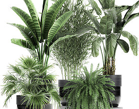 3D model Houseplants in a black pot for the interior 711