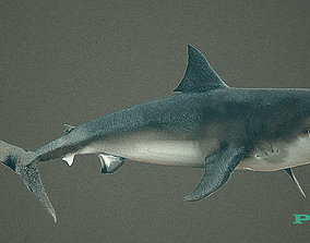 3D model animated sharks
