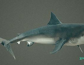 3D model animated sharks