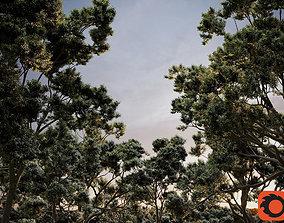 HeliosVegetation vol2 - Eucalyptus Corona 3D model
