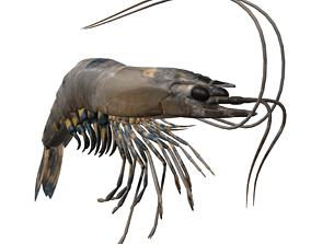 3D model Shrimp
