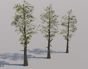 Trio of Large Pine Trees 3D