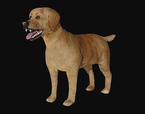 Labrador 3D model VR / AR ready