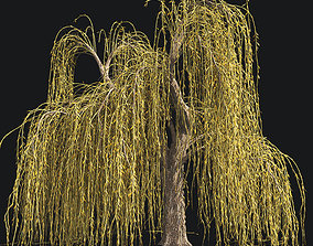Weeping Willow Fall Tree 3D asset