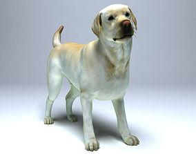 3D model animated Labrador Dog
