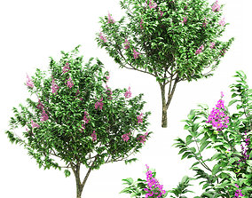 Banaba is young -2 models 3D