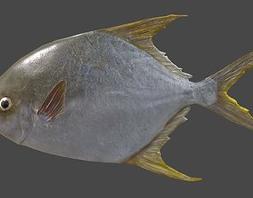 Pampus argenteus fish 3D asset