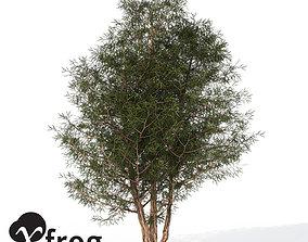 3D XfrogPlants English Yew 1