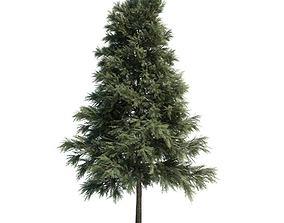 3D Pinus Sylvestris Plant