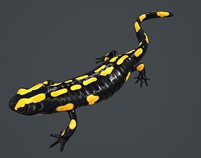 3D model Salamander