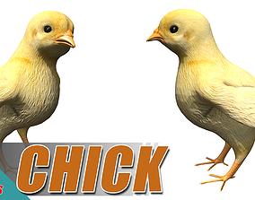 Little Chick 3D asset
