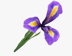 3D model The Iris