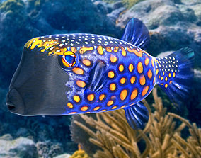 3D Blue Boxfish