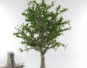3D Pin cherry Tree