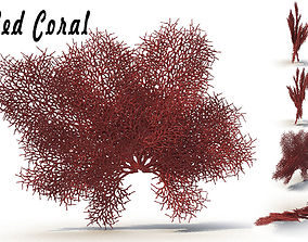 3D Red Coral