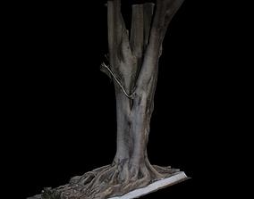 3D model woods Ficus