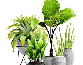 3D Plantes en pot