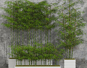 3D model Plants collection 06 Bamboo