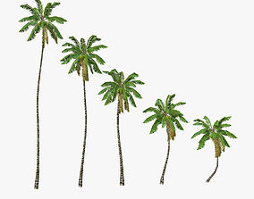 3D model Coconut palm tree 03 - Low Poly