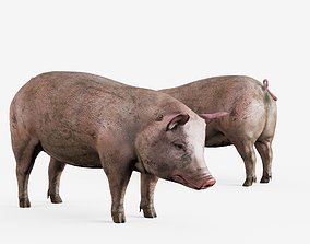 lowpoly pig 3D model