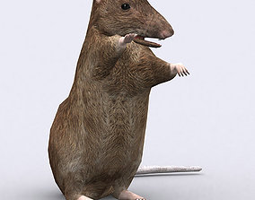 3DRT - Rat animated realtime