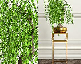 PLANTS 18 3D super