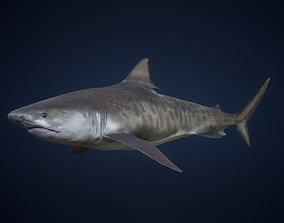 3D model Tiger Shark - GameReady