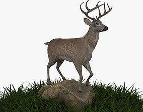 white tailed deer 3D