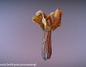 Helvella crispa aka white saddle mushroom 3D