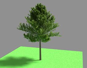 3D asset Tree Plant