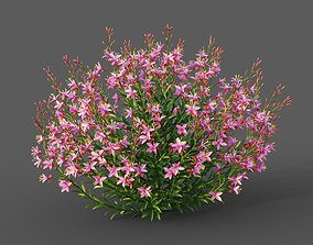XfrogPlants Lindheimers Beeblossom - Gaura Lindheimeri 3D