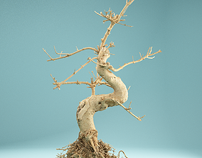 3D RAW SCAN Dead Bonsai Tree High Poly 06