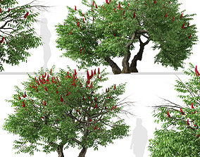 Set of Rhus typhina or Staghorn sumac Trees - 2 Trees 3D