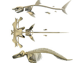 Sharks Skeletons 3D Models anatomy