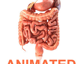 Digestive system Animated 3D asset