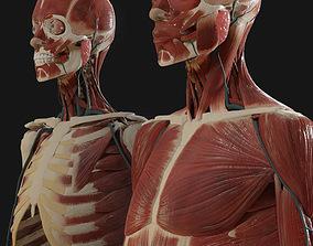 Anatomy 2019 3D