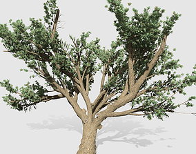 3D asset Cedar OfLebanon tree collection 9 trees Models 2