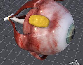 Human Sense 3D