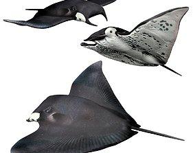 Manta ray 3D asset rigged