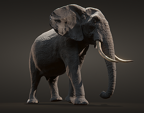 Africant elephant 3D asset animated