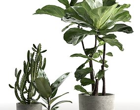 Cactus and Ficus in Pots 3D