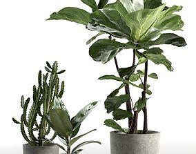 set 3D Cactus and Ficus in Pots