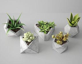 3D PBR Concrete Potted Cactus Set
