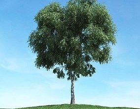 3D Large Leafed Tree