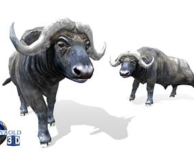 animated Buffalo rigged animated lowpoly 3d model